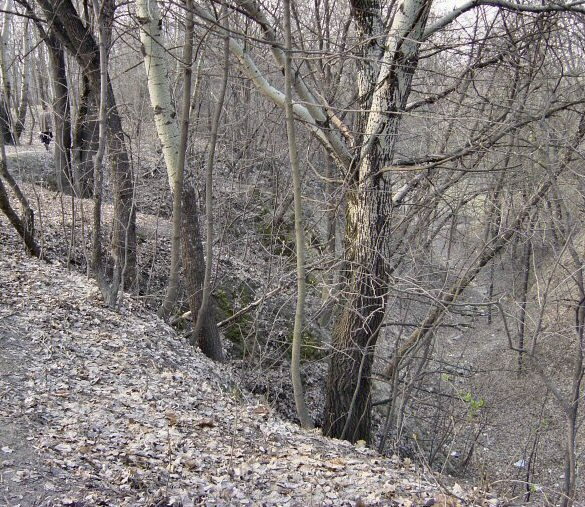 The current appearance of a forested Babi Yar ravine. Credit: Wikimedia Commons.